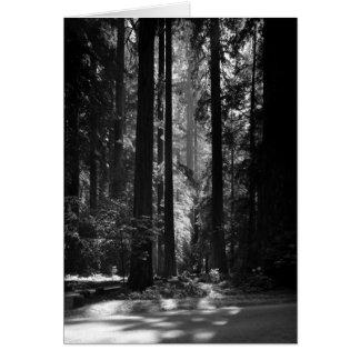 Tarjeta Bosque de la secoya, Grove del fundador, 1966