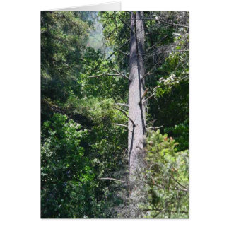 Tarjeta Bosques de la secoya