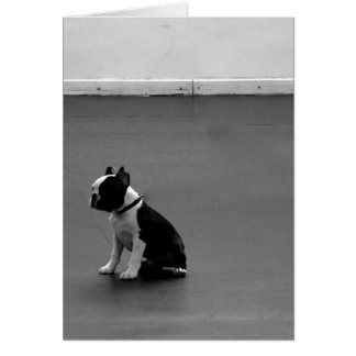 Tarjeta Boston Terrier DRU 2
