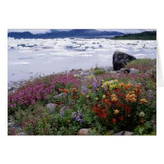 Tarjeta Brocha, Lupine, Fireweed. Icebergs Russell