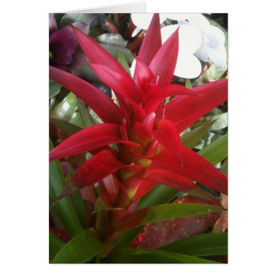 Tarjeta Bromeliad, rojo