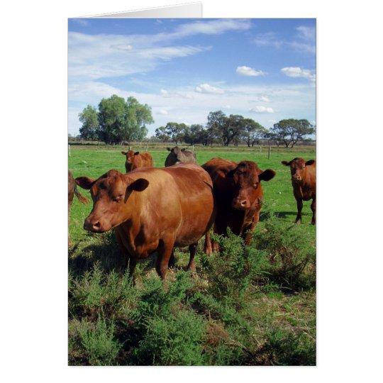 Tarjeta Brown_Cow_Field, _