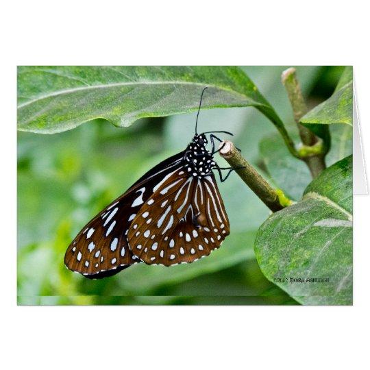 Tarjeta Brown pintó la mariposa