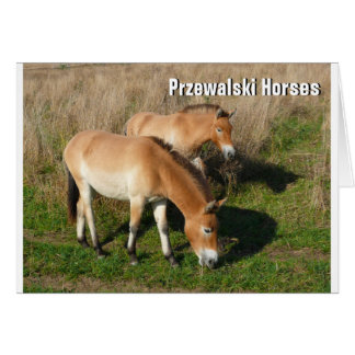 Tarjeta Caballos 02.T de Przewalski