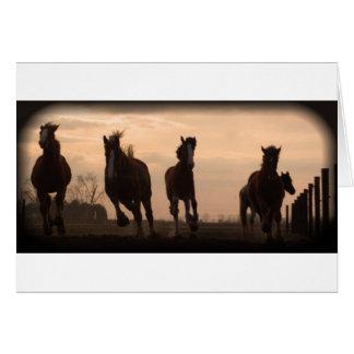 Tarjeta caballos en el paisaje de la puesta del sol