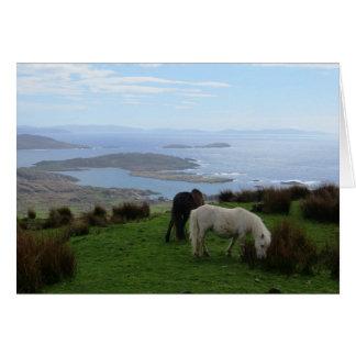 Tarjeta Caballos salvajes en Irlanda