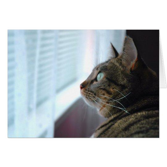 Tarjeta Cada el gatito comtempla afuera