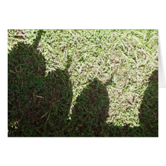 Tarjeta Calabazas de la sombra