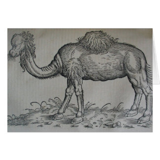 Tarjeta Camello
