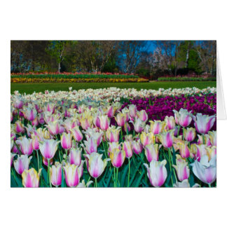 Tarjeta Campo de tulipanes