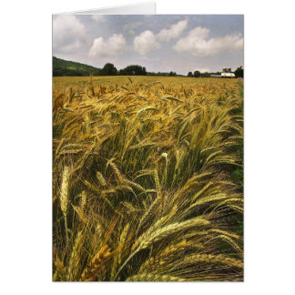 Tarjeta Campo del grano
