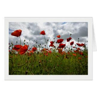 Tarjeta Campo rojo de la amapola, Dorset
