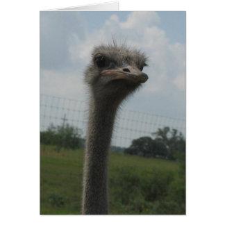 """Tarjeta Cara de la avestruz del """"mí soy"""" Notecard triste"""