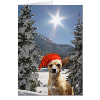 Tarjeta Chihuahua del navidad