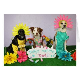 Tarjeta chistosa del día de madre usando perros en