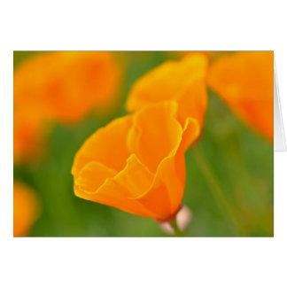 Tarjeta Cierre anaranjado de la amapola del cumpleaños