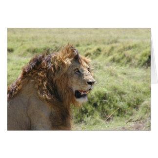 Tarjeta (Clubs de leones) león majestuoso (Masai Mara,