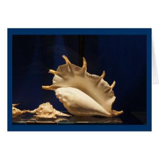 Tarjeta Colección de Shell