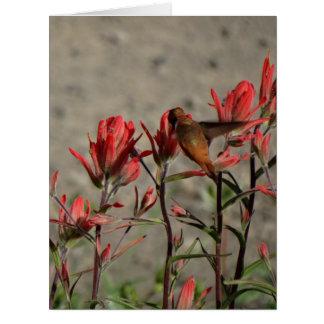 Tarjeta colibrí flw. cardinal