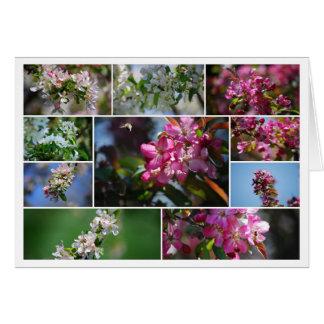 Tarjeta Collage de los flores de Apple y de las abejas de