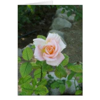 Tarjeta Color de rosa