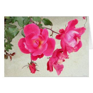 Tarjeta Color de rosa apacible
