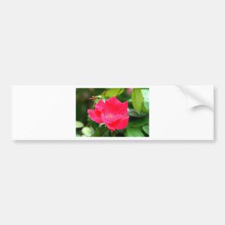 Tarjeta color de rosa rosada hermosa de la amistad pegatina para coche
