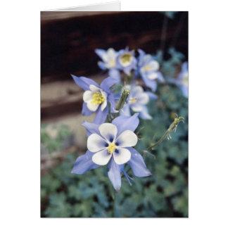 Tarjeta Colorado Columbine azul