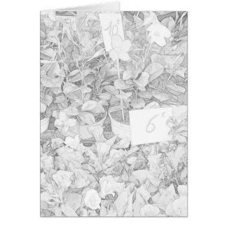 Tarjeta Colorante del mercado de la flor