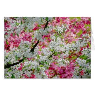 Tarjeta Colores del flor de la primavera