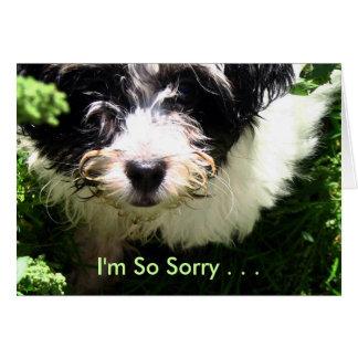 Tarjeta Condolencia del mascota - perrito de Havanese