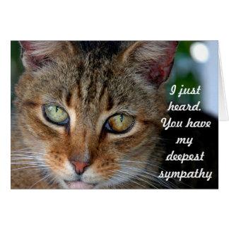 Tarjeta Condolencia tardía del gato