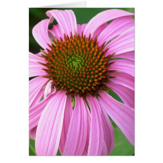 Tarjeta Coneflower rosado usted me sorprende