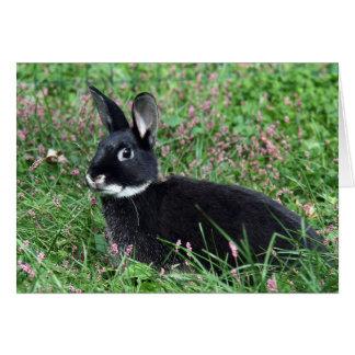 Tarjeta Conejito negro en hierba