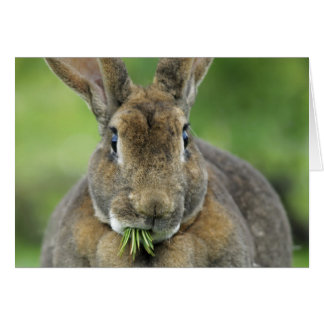 Tarjeta Conejo de conejito lindo de Rex que come agujas