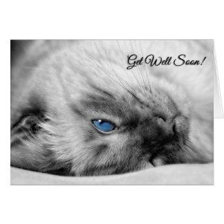 Tarjeta Consiga a deseos bien el gato siamés