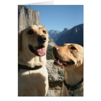 Tarjeta Copia de Dogs_TunnelView