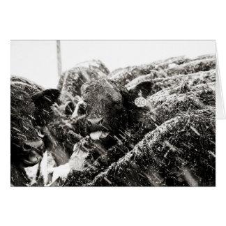 Tarjeta Copos de nieve de cogida de la vaca negra y blanca