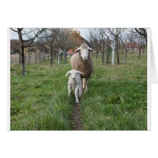 Tarjeta Cordero y ovejas