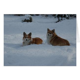 Tarjeta Corgis que juegan en nieve