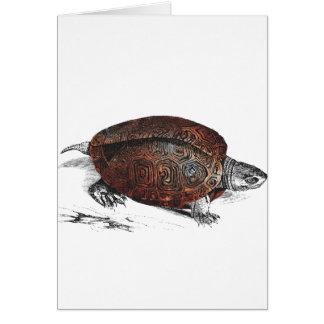 Tarjeta Cosmic turtle 1