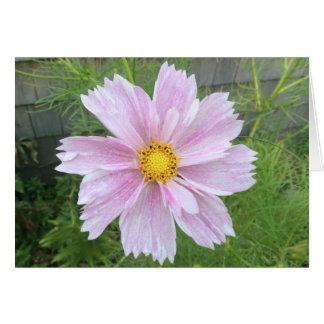 Tarjeta Cosmos - palidezca - rosa y verde ---