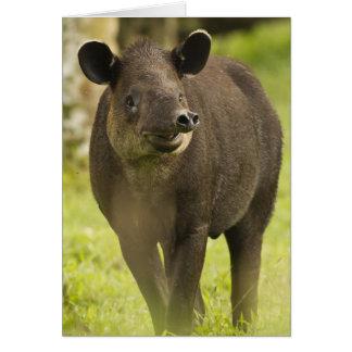 Tarjeta Costa Rica. Bairdii del Tapirus del Tapir de