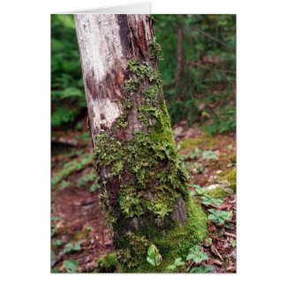 Tarjeta cubierta de musgo del árbol