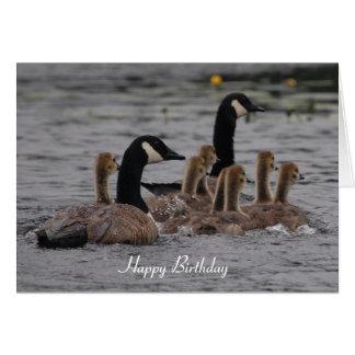 Tarjeta Cumpleaños - gansos canadienses