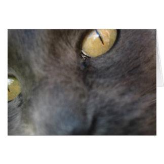 Tarjeta Cumpleaños Nosy del gato