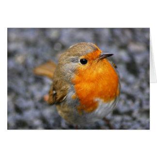 Tarjeta 'Dartmeet Robin