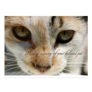 tarjeta de condolencia del gato postal