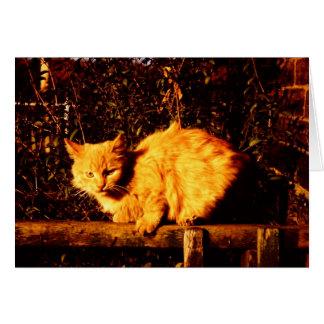 Tarjeta de condolencia para el dueño del gato