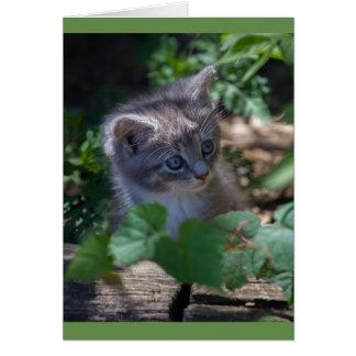 Tarjeta de cumpleaños adorable del gatito tarjeta de felicitación
